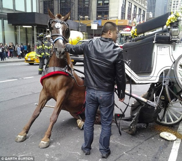 http://www.dailymail.co.uk/news/article-2434082/Horse-flips-midtown-traffic-breaking-carriage-trapping-animal-underneath.html